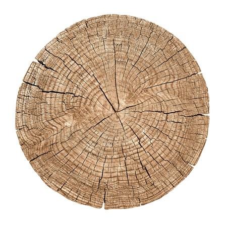 birretes: Sección del tronco de un árbol que muestra los anillos de crecimiento en el fondo blanco Cruce