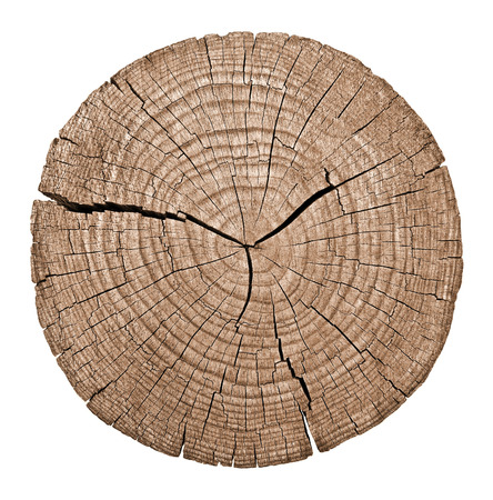 ring: Cross section of tree trunk showing growth rings on white background