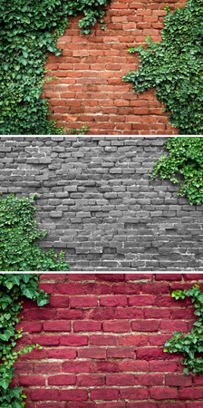 ancient brick wall: Old brick wall covered in ivy