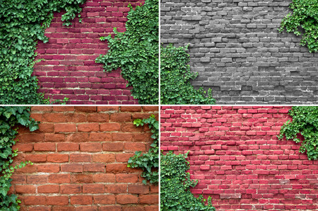 ivy wall: Old brick wall covered in ivy