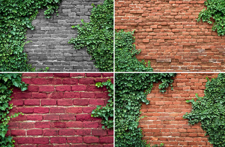 creeper: Old brick wall covered in ivy