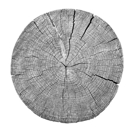 Cross section of tree trunk showing growth rings on white background. wood Stockfoto