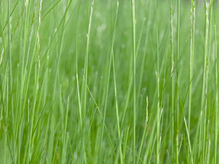Lush green grass on meadow, spring summer outdoors close-up, copy space, wide format. Beautiful artistic image of purity and freshness of nature. Abstract bokeh background.