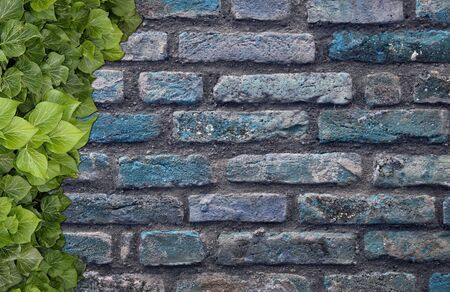 Old Texture brick wall, background, detailed pattern covered in ivy 写真素材