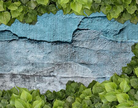 Old painted concrete wall creeper vines, ivy. Vintage panoramic banner background. 写真素材