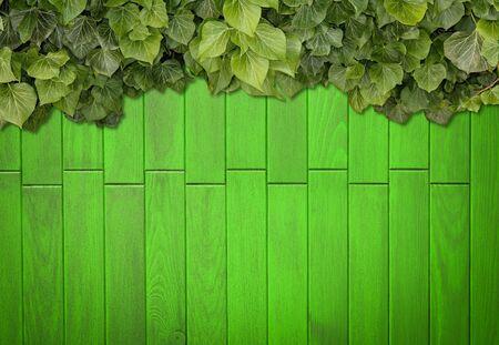 Holzbretter mit grünen Blättern bedeckt. Grüne Efeublätter klettern auf Holzzaun. Natürliche Hintergrundtextur.