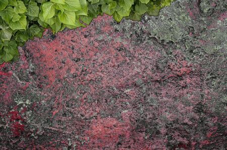 Old painted concrete wall creeper vines, ivy. Vintage panoramic banner background. Zdjęcie Seryjne