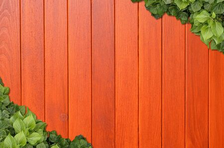 Wood planks covered by green leaves. Green ivy leaves climbing on wooden fence. Natural background texture. Zdjęcie Seryjne