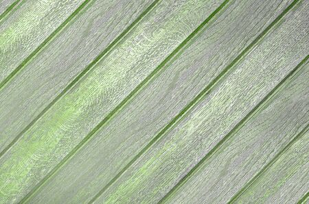 Wood texture. Lining boards wall. Wooden background. pattern. Showing growth rings Zdjęcie Seryjne - 141800200