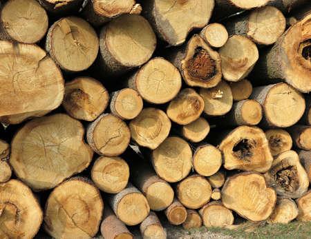 wooden log house, wood cut across the background, Wood cut across, bark beetle calamity Stock Photo