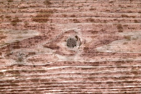 Wood texture Stock Photo - 4341663