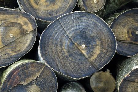 sawed: Pile of wooden logs