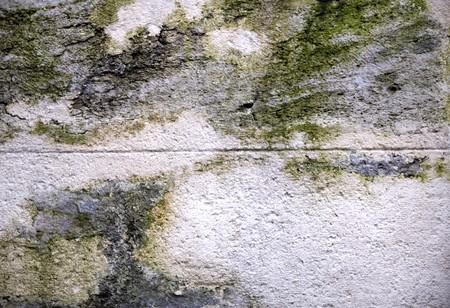 Mur de pierre avec des champignons