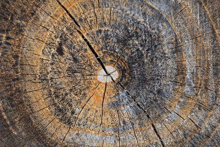 Cross section of tree Stock Photo
