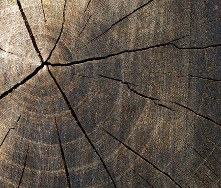 Coupe d'arbres Banque d'images