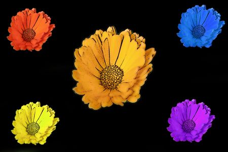 Daisies in different colours on black background