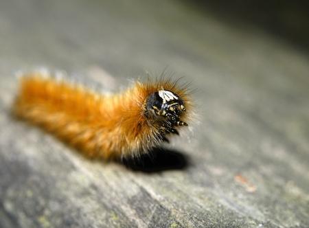 Caterpillar Close up Details