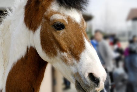 Pony looking to camera, blurred background