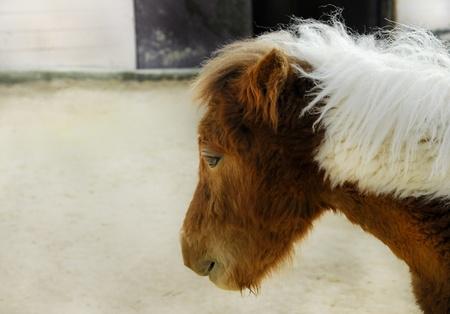 Sad looking pony walking in park