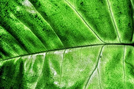Green Leaf Detail, Close Up