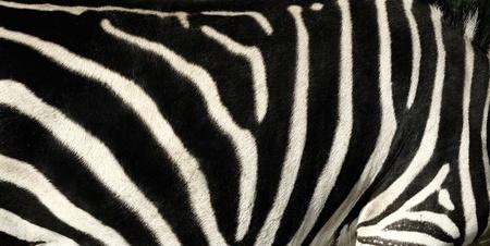 Pattern of Zebra Skin