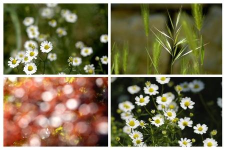 Daisies Collage work, 4 photos