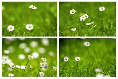 Daisies Collage work Stock Photo
