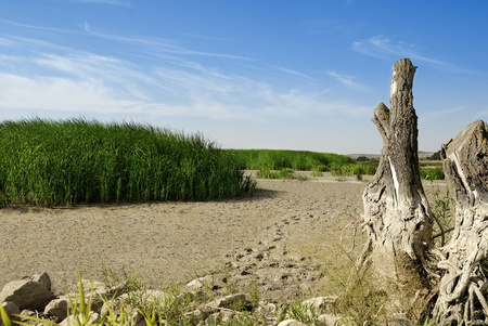 Dry Lake, Dead Tree and Reeds