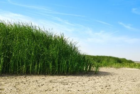 Photo de Dry Lake Reeds et le jour lumineux