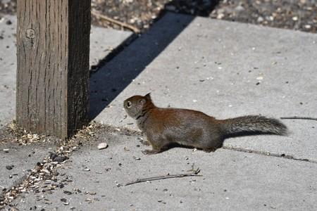 Squirrel nature park