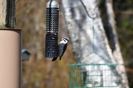 Woodpecker, nature park