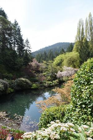 pond garden spring