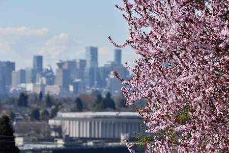Spring has come to downtown Vancouver Фото со стока
