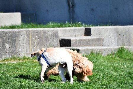 Dogs on play