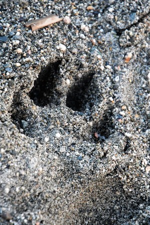 Dog paw print is on the beach.