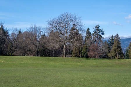 A picture of the grass-covered field in Stanley park. Vancouver BC Canada 写真素材