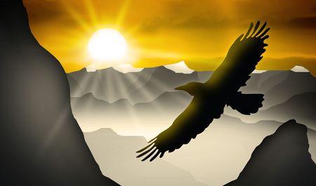adler silhouette: Adler fliegt