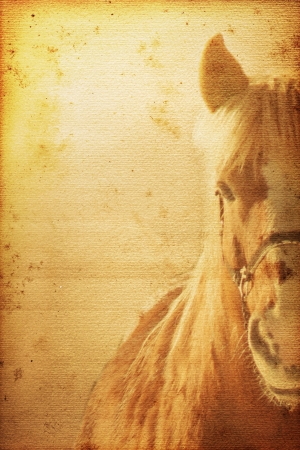 Beautiful horse on old nostalgic background used look