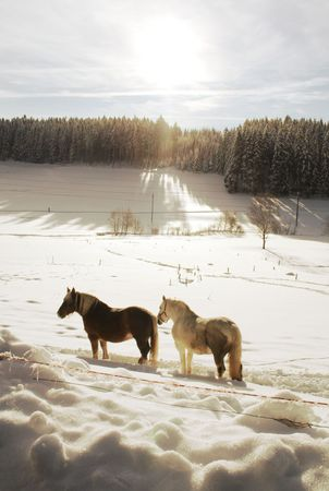 blanket horse: Winter with horses in the Black Forest in Germany