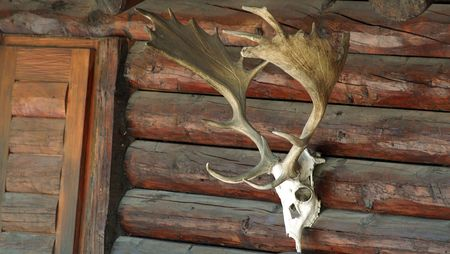 hunter's cabin: skull with horns on a hunting lodge