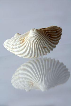 dynamically: shell