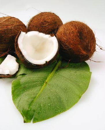 Tout noix de coco tropicale sur feuilles de palmier vert Banque d'images - 5581109