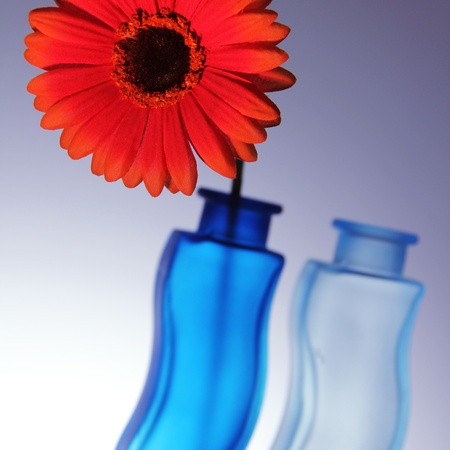 bright red gerbera with two blue vases photo