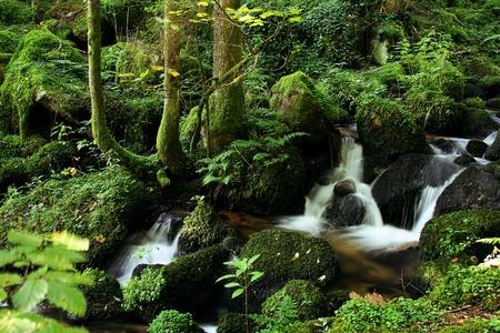 美しい緑の natrure で少しの流れる川 写真素材