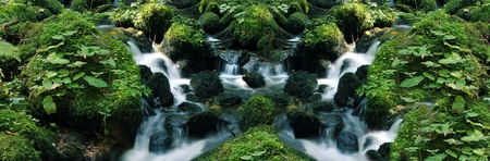 rain forest background: little flowing river in beautiful green natrure
