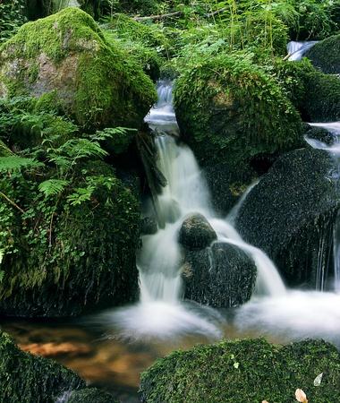flowing river: peque�o r�o que fluye en el hermoso verde natrure
