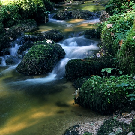 cascade mountains: little flowing river in beautiful green natrure