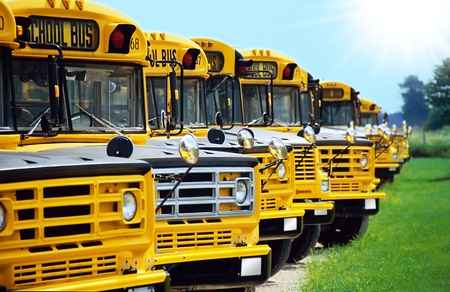 omnibus: any yellow canadian school busses in a row