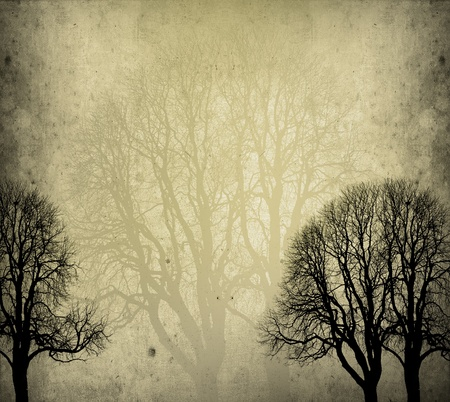 old trees background in autumn with texture photo