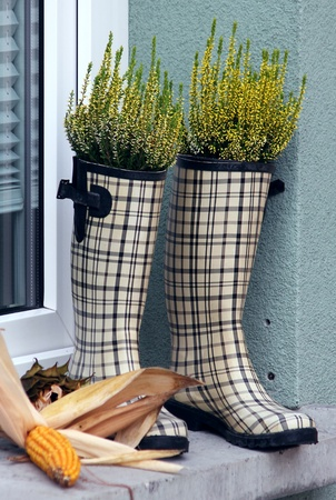 checked rubber boots with greenery and plants inside Stock Photo - 11316114